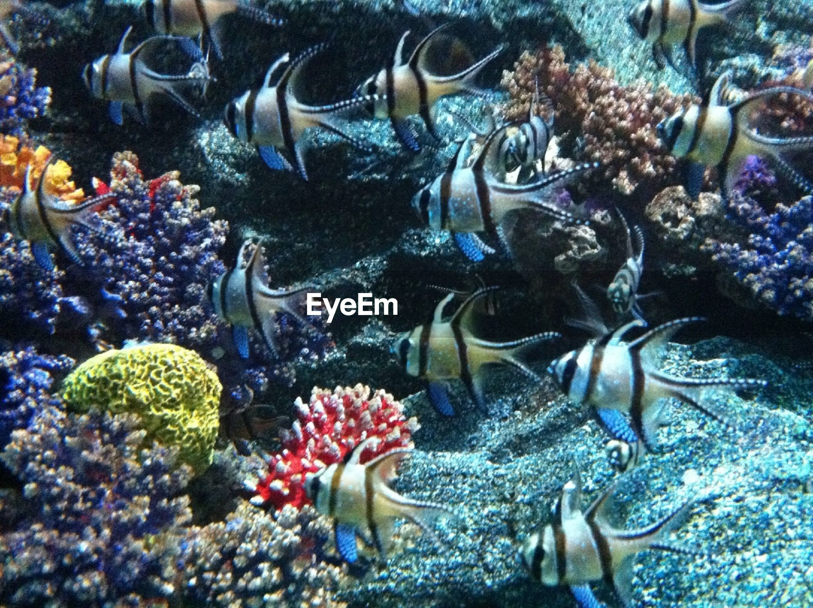 fish, sea life, animal themes, underwater, water, swimming, undersea, coral, wildlife, animals in the wild, high angle view, school of fish, abundance, nature, aquarium, sea, variation, no people, medium group of animals