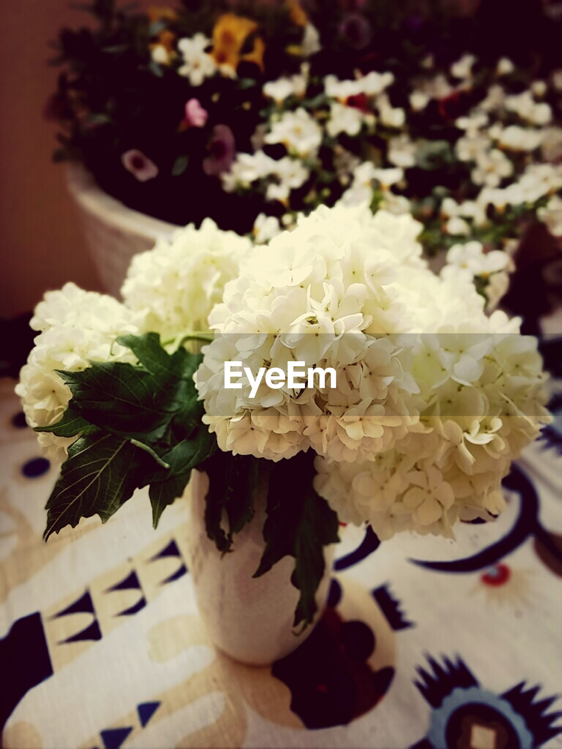 flower, freshness, indoors, close-up, petal, white color, focus on foreground, table, fragility, still life, high angle view, flower head, sweet food, bunch of flowers, vase, no people, bouquet, rose - flower, selective focus, decoration