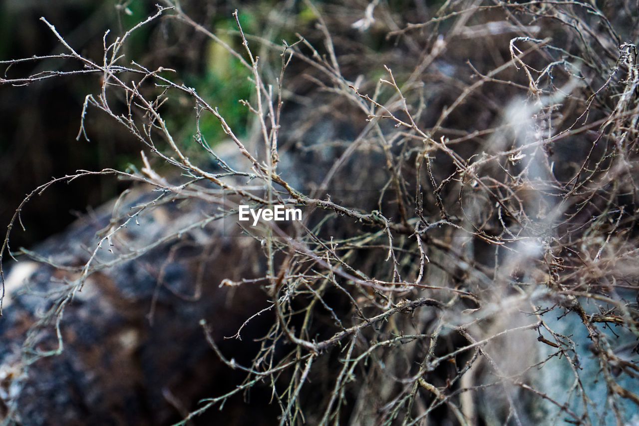 plant, tree, no people, dry, close-up, focus on foreground, selective focus, day, nature, branch, bare tree, twig, dead plant, outdoors, dried plant, tranquility, land, beauty in nature, vulnerability, fragility, complexity, dried, tangled, wilted plant