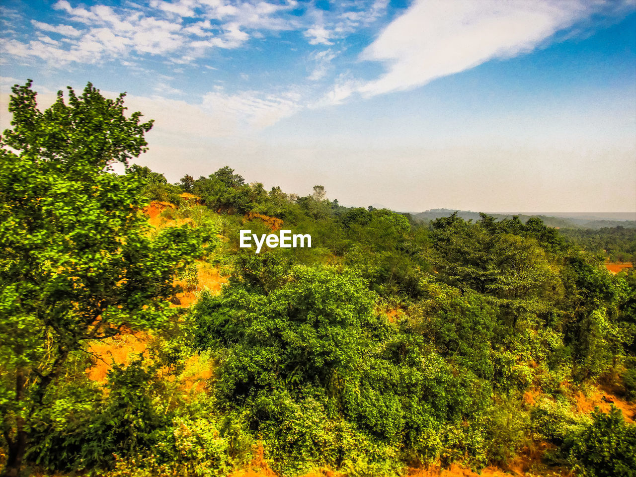 tree, nature, growth, beauty in nature, scenics, no people, sky, tranquility, plant, forest, outdoors, landscape, day