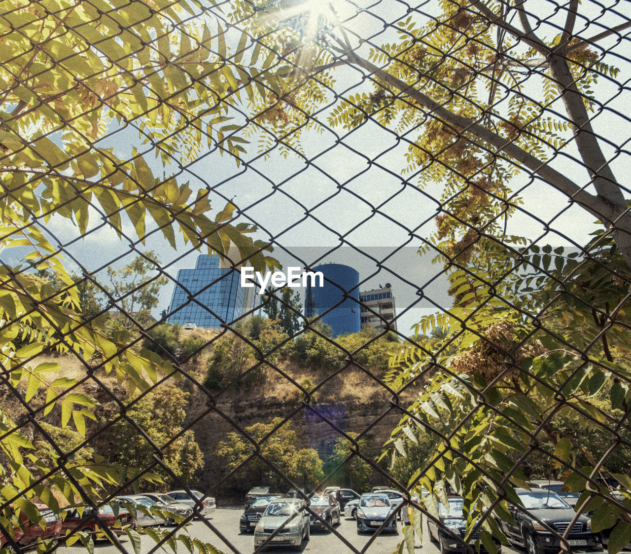 plant, tree, architecture, fence, day, no people, sky, nature, built structure, boundary, security, building exterior, barrier, building, outdoors, safety, protection, chainlink fence, window, pattern