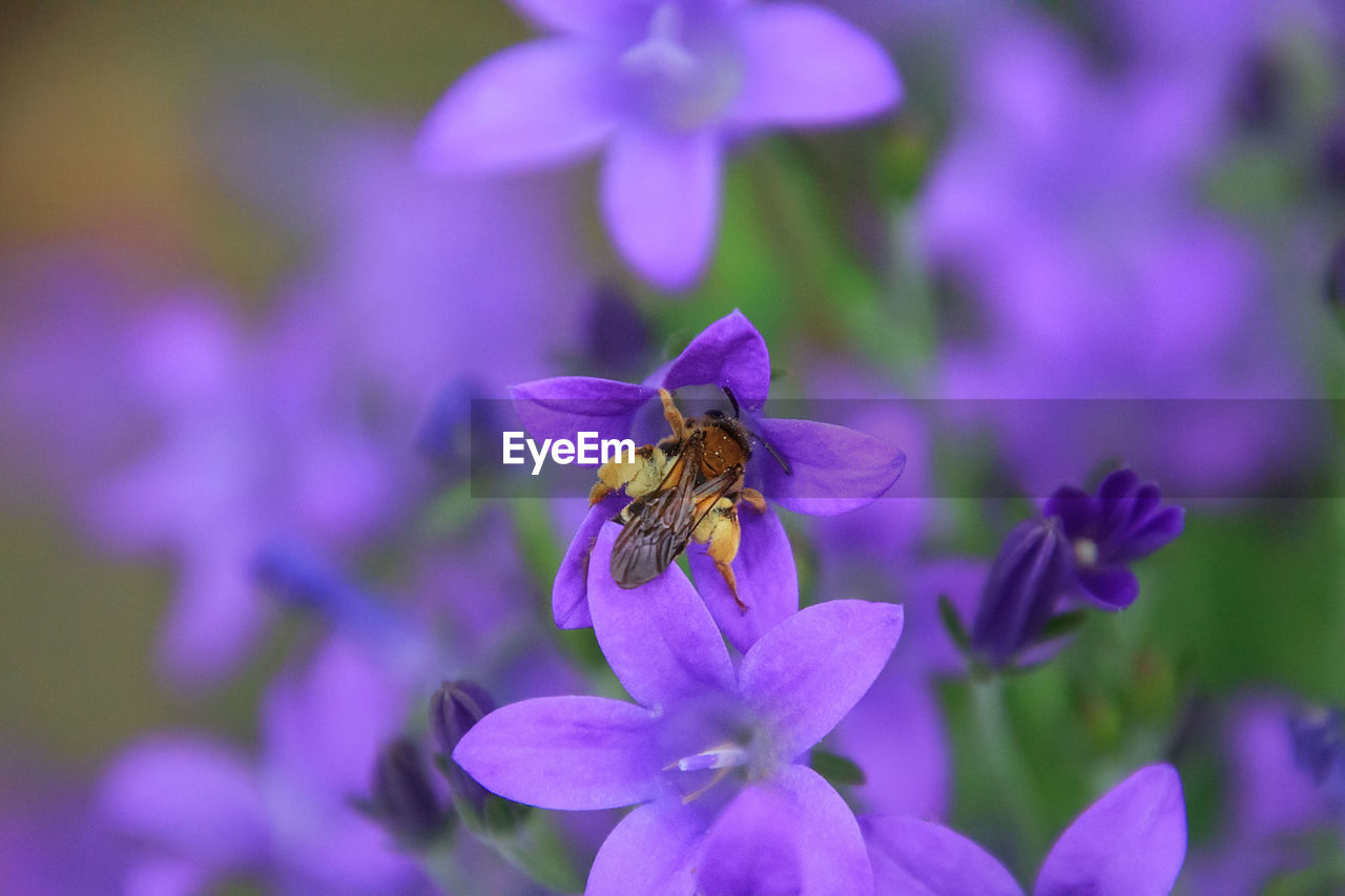 flowering plant, flower, petal, beauty in nature, freshness, fragility, vulnerability, flower head, insect, plant, invertebrate, one animal, animal themes, animal, purple, growth, bee, animals in the wild, inflorescence, close-up, pollination, pollen, no people