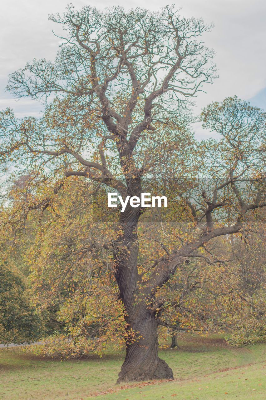 tree, nature, no people, autumn, tranquility, day, beauty in nature, outdoors, branch, scenics, growth, landscape, sky