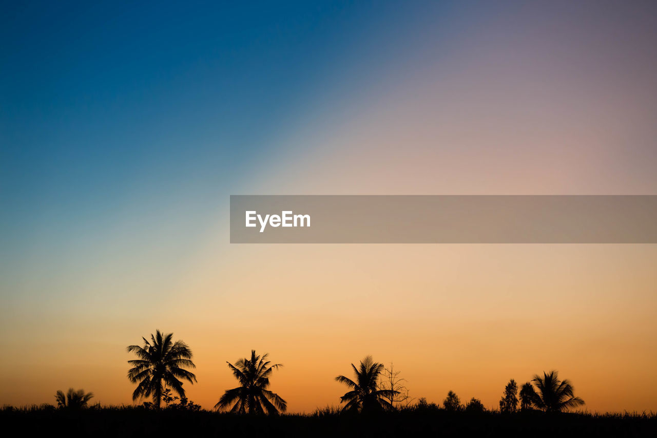 sky, sunset, beauty in nature, scenics - nature, tree, tranquil scene, tranquility, silhouette, orange color, plant, clear sky, copy space, nature, no people, non-urban scene, idyllic, environment, landscape, growth, outdoors, romantic sky