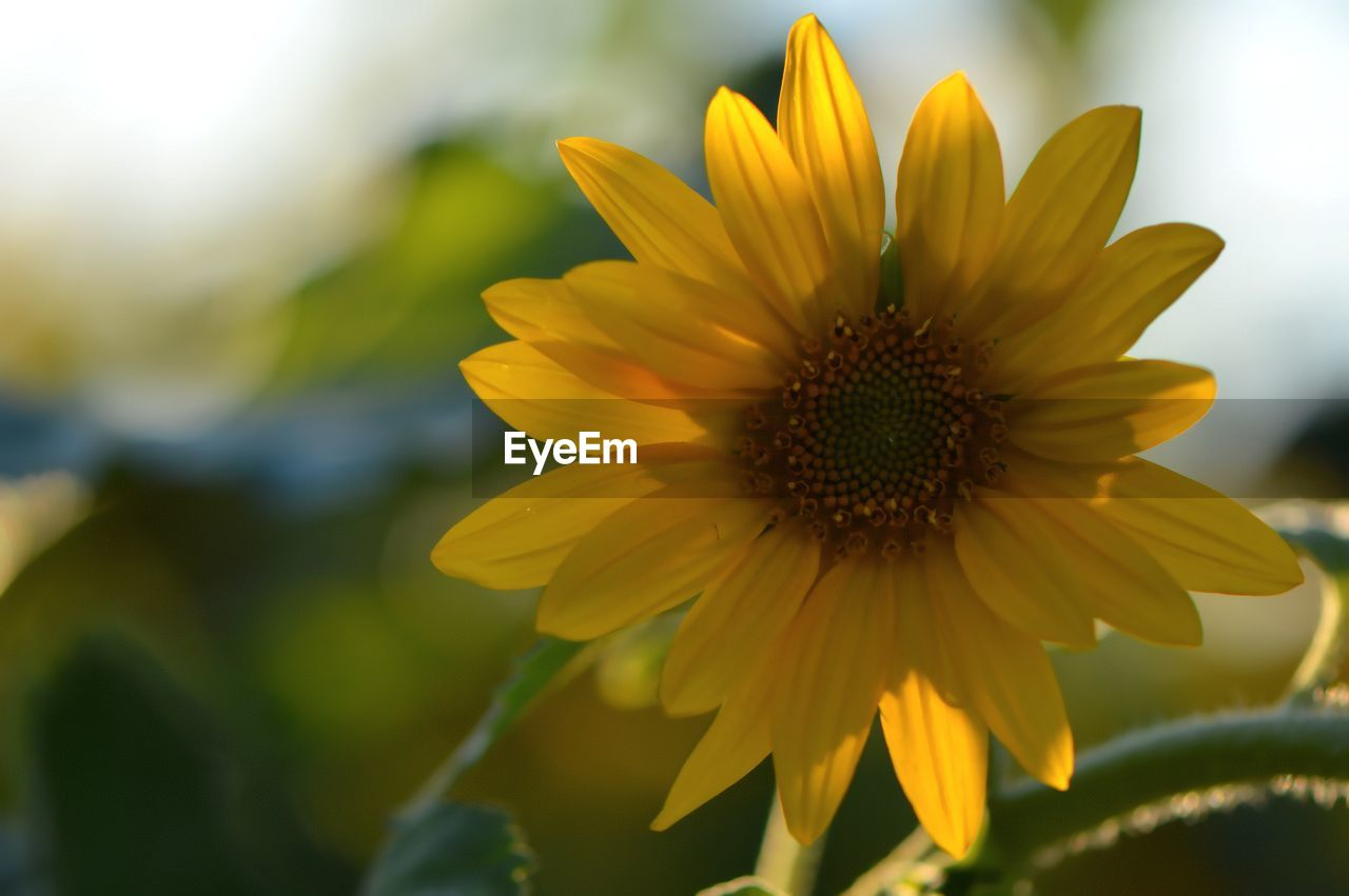 flower, yellow, petal, fragility, nature, beauty in nature, growth, freshness, flower head, plant, no people, close-up, blooming, outdoors, day