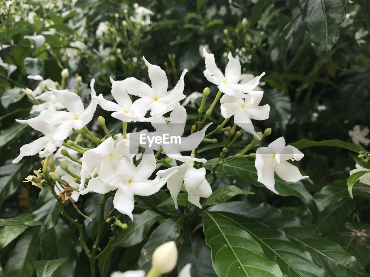 white color, flower, nature, beauty in nature, growth, fragility, plant, blooming, petal, no people, freshness, outdoors, day, close-up