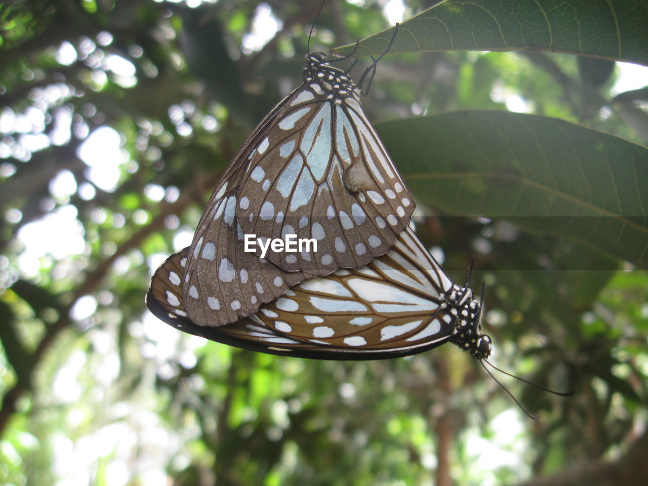 butterfly - insect, animal themes, one animal, day, insect, animals in the wild, animal wildlife, low angle view, butterfly, no people, tree, nature, cocoon, animal markings, outdoors, close-up, leaf, beauty in nature