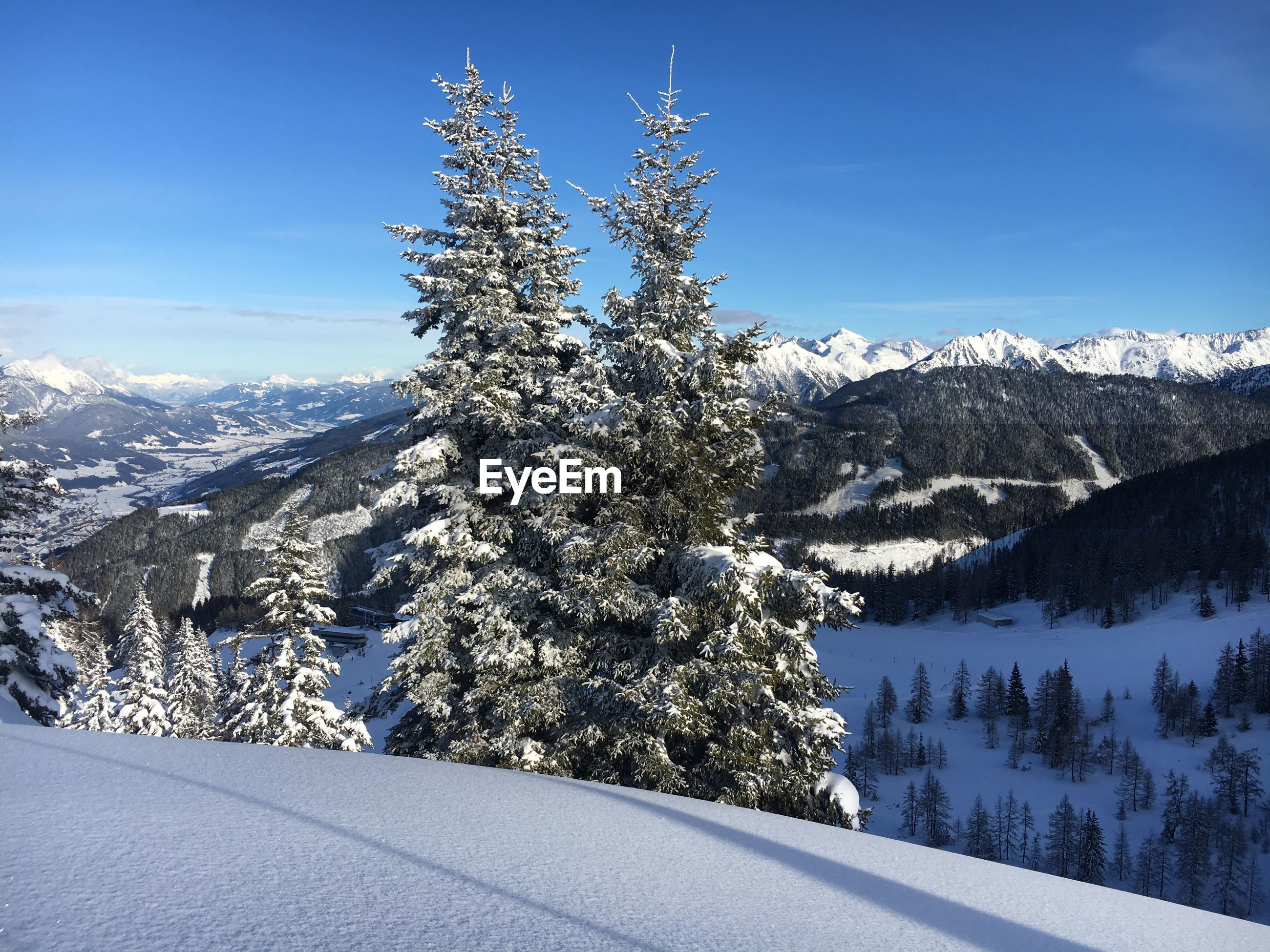 SNOW COVERED PINE TREES AGAINST MOUNTAINS