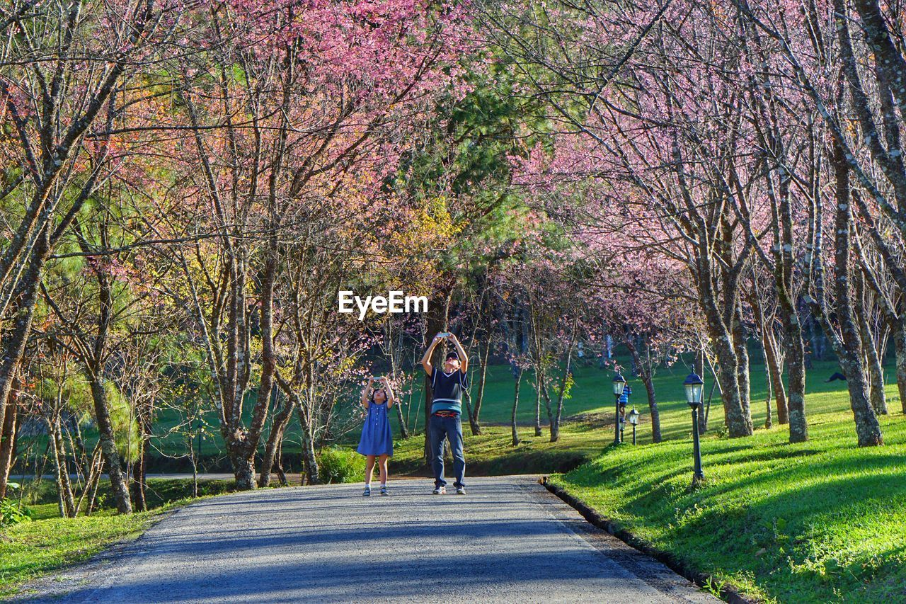 tree, togetherness, full length, child, road, family with one child, outdoors, nature, childhood, walking, leisure activity, real people, day, bonding, adult, people, flower, branch, beauty in nature