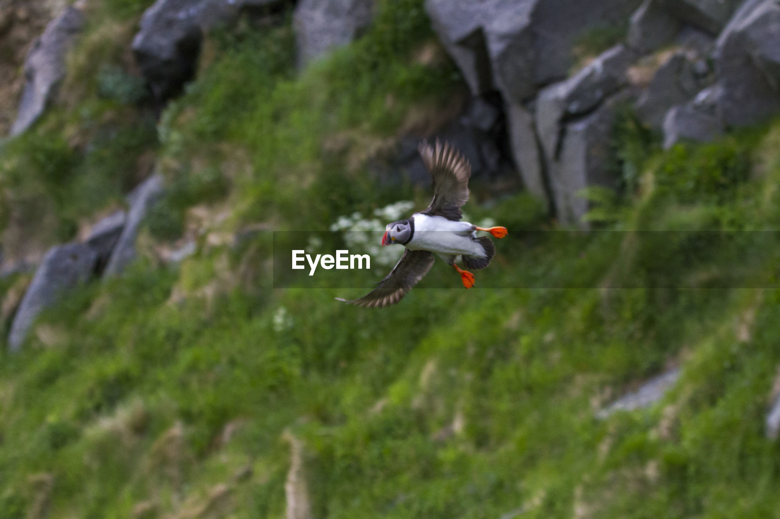Bird flying against mountain