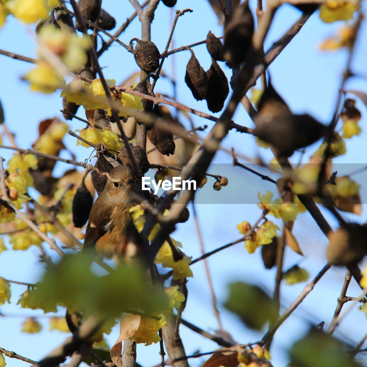 animal themes, low angle view, tree, plant, animal, branch, animal wildlife, one animal, animals in the wild, vertebrate, no people, growth, day, nature, selective focus, mammal, sky, bird, outdoors, focus on foreground