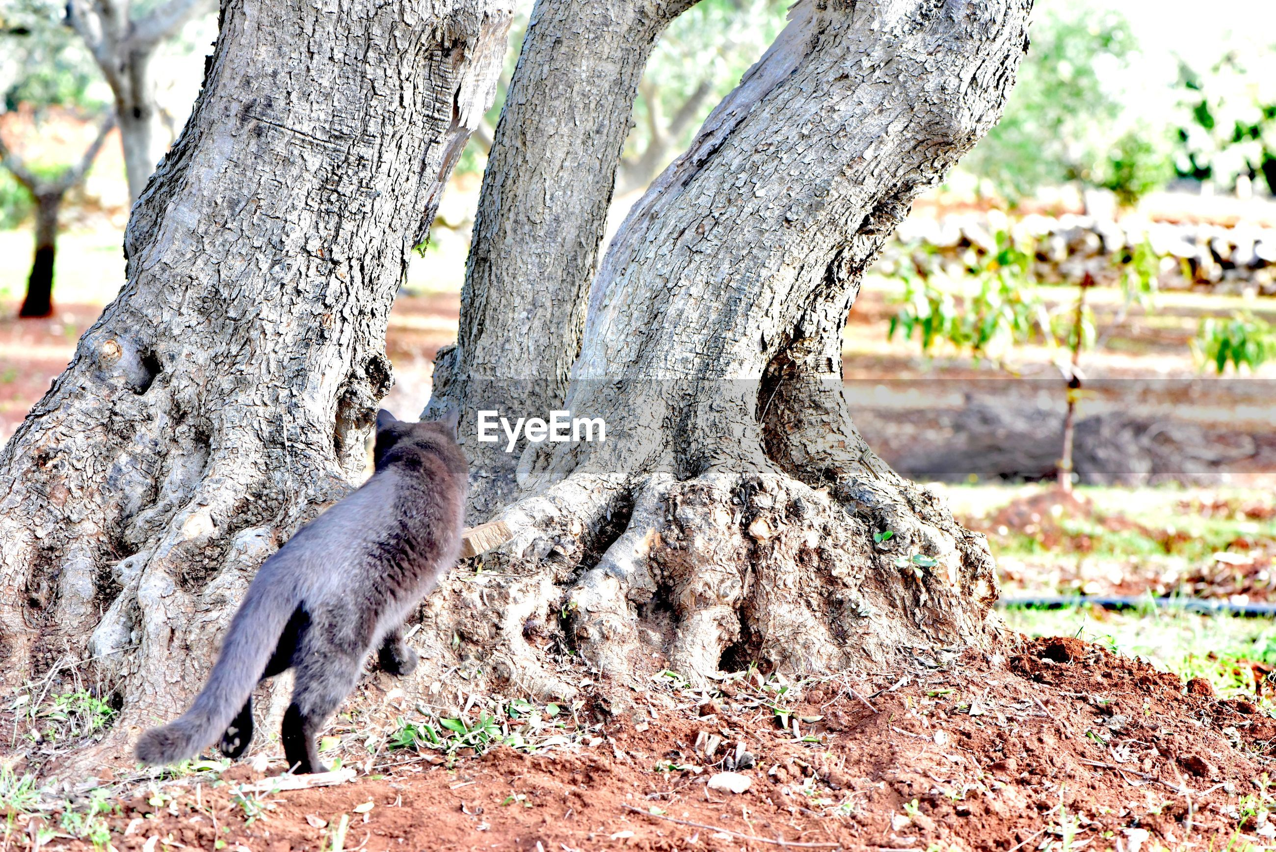 animal themes, animal, tree, animal wildlife, animals in the wild, trunk, tree trunk, plant, mammal, vertebrate, no people, nature, one animal, land, day, focus on foreground, rodent, field, outdoors, sunlight, herbivorous