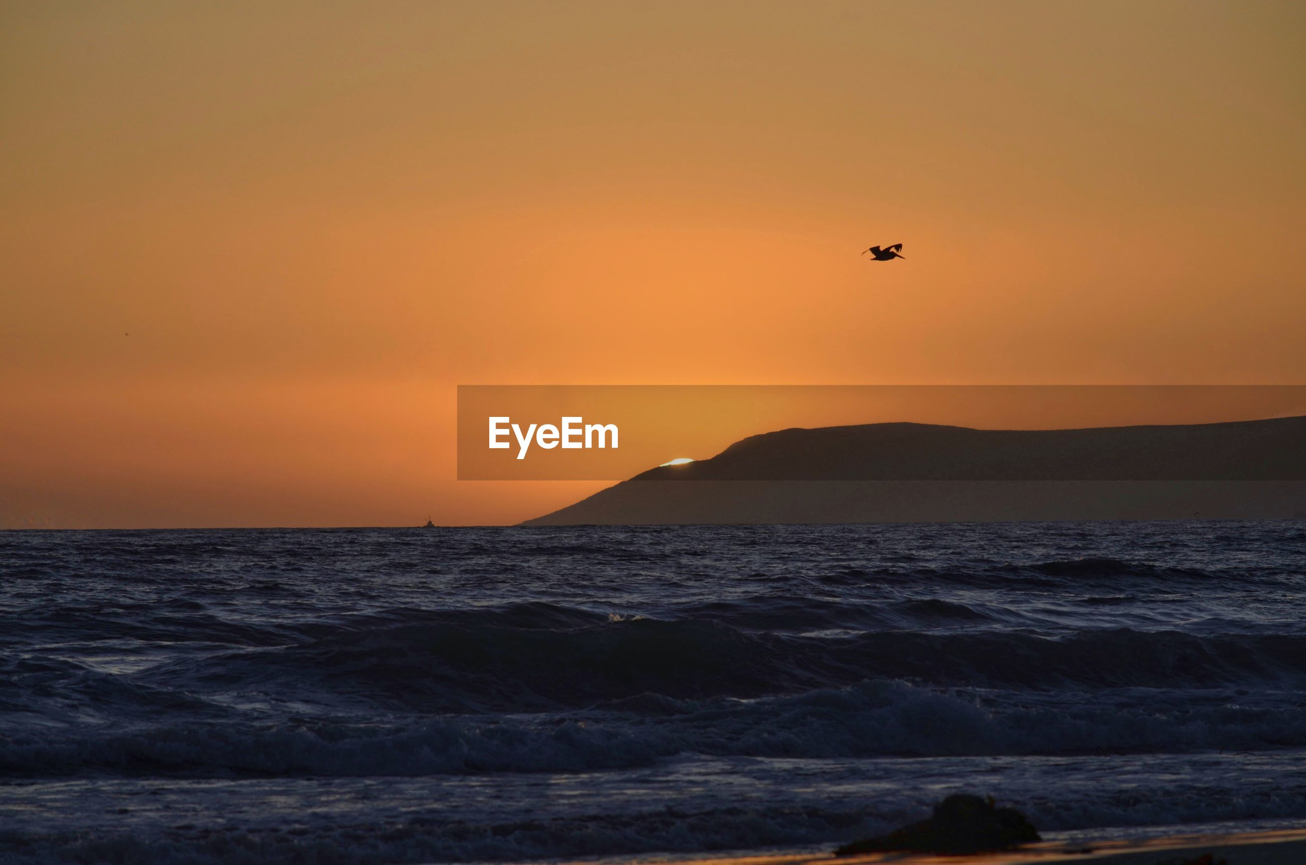 Silhouette bird flying over sea against orange sky during sunset
