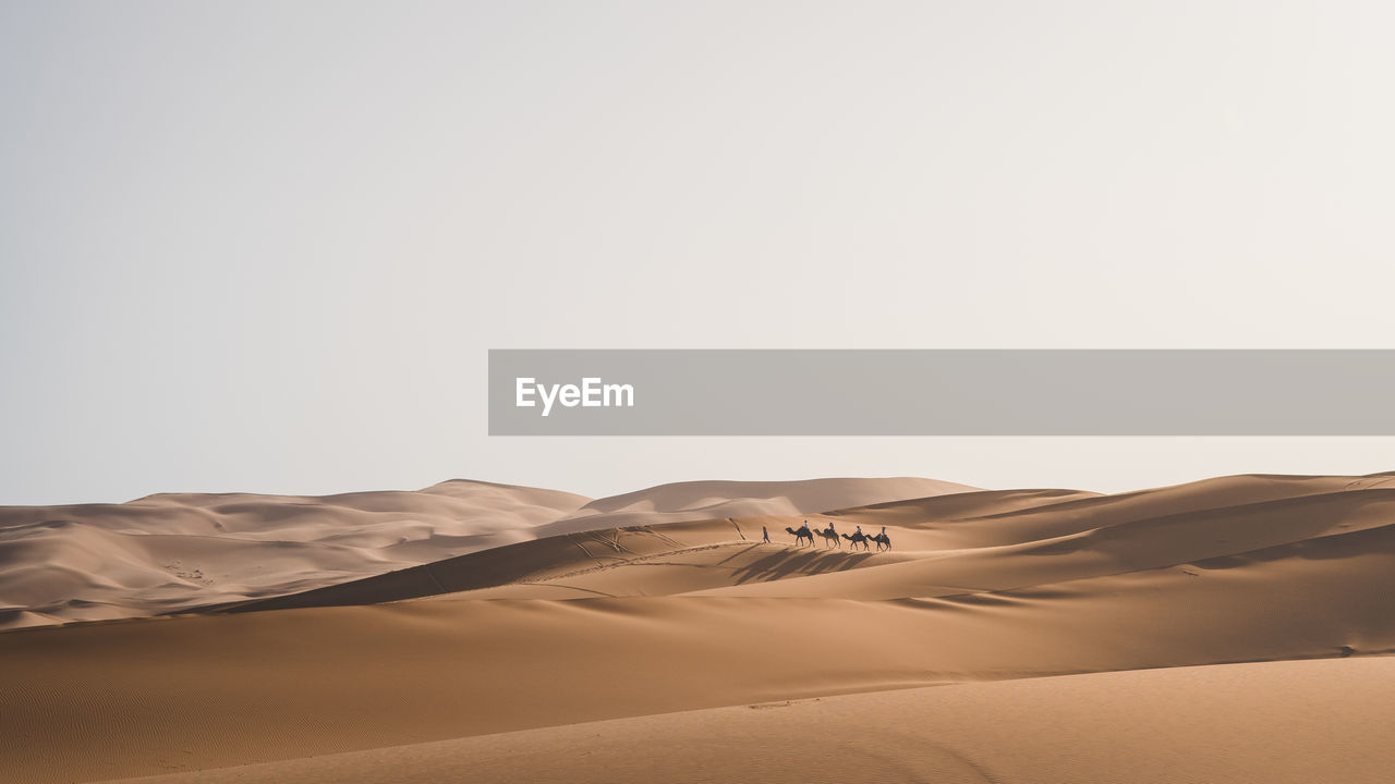 People riding camels on desert against clear sky