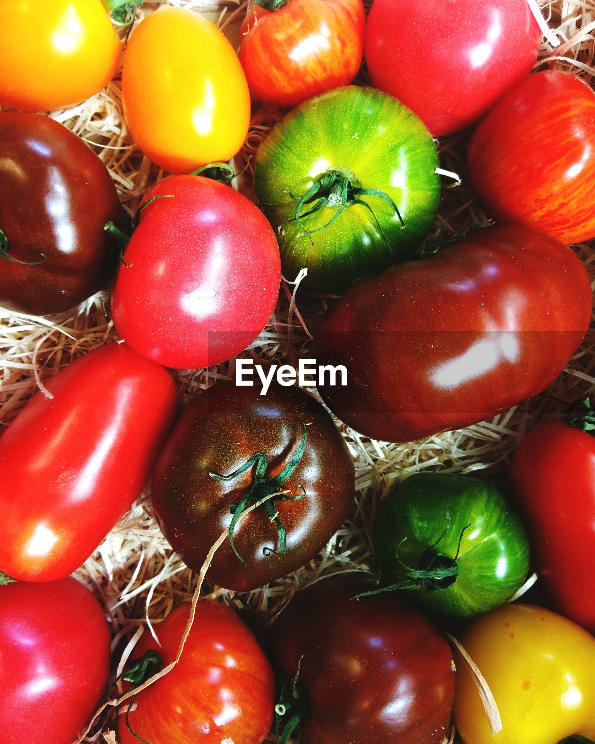 High angle view of various tomatoes on hay