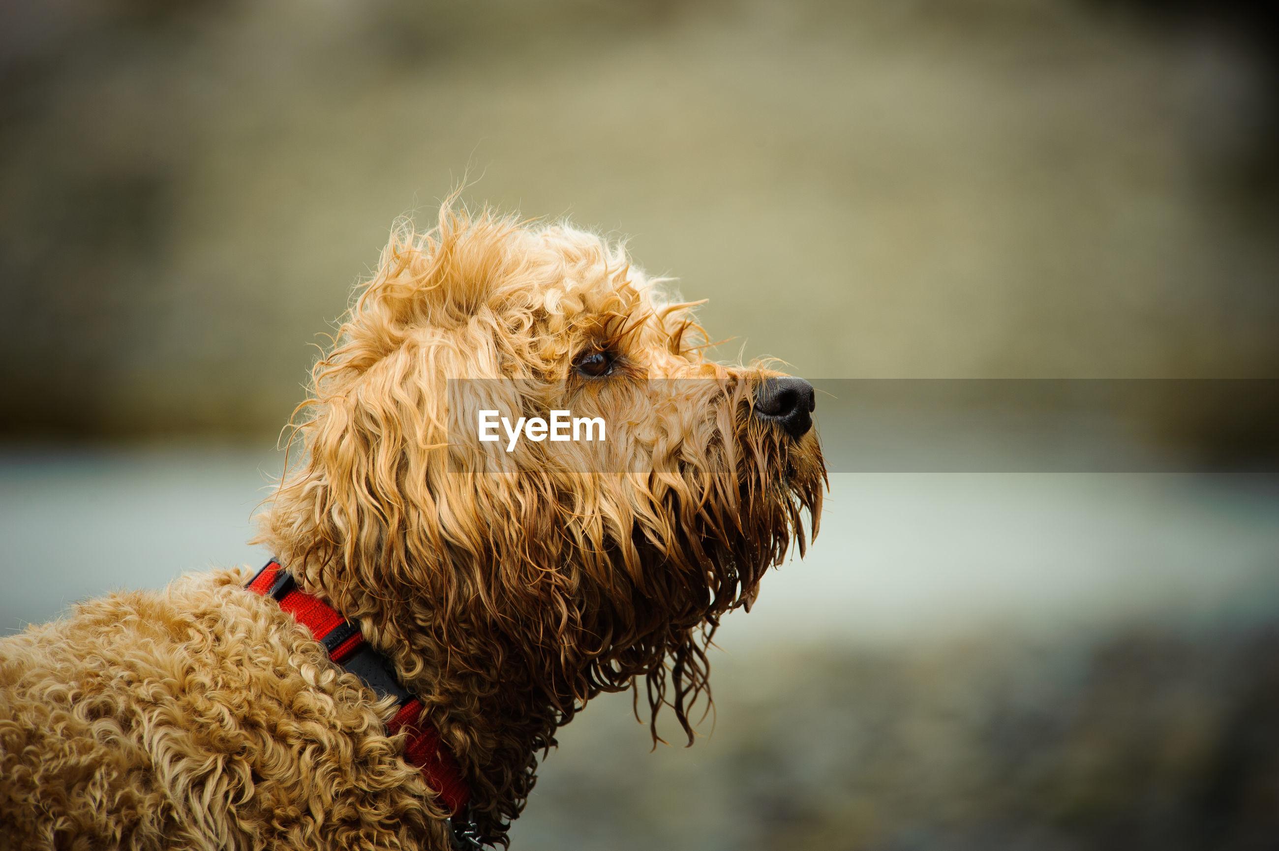 CLOSE-UP OF DOG ON STICK