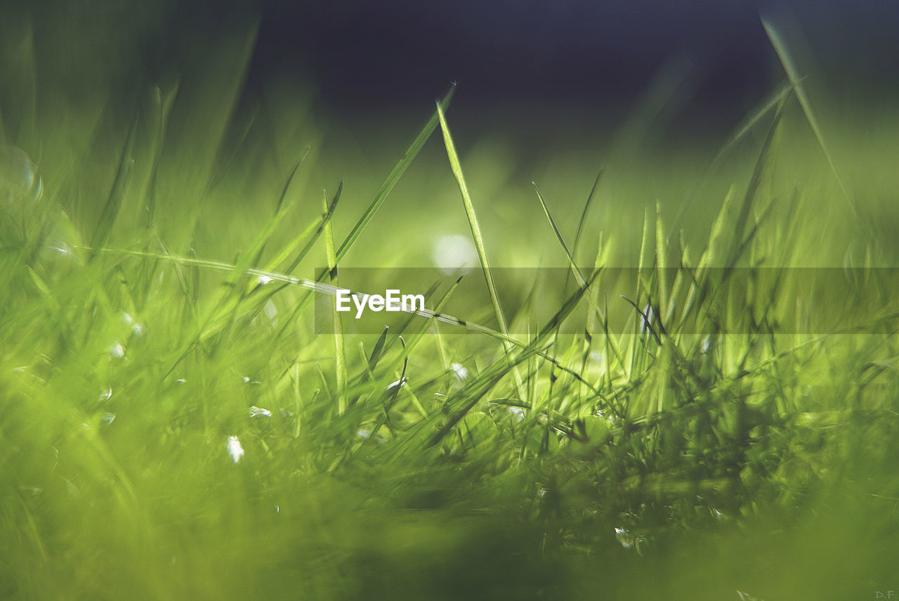 grass, green color, nature, growth, field, no people, selective focus, beauty in nature, day, outdoors, plant, close-up, freshness