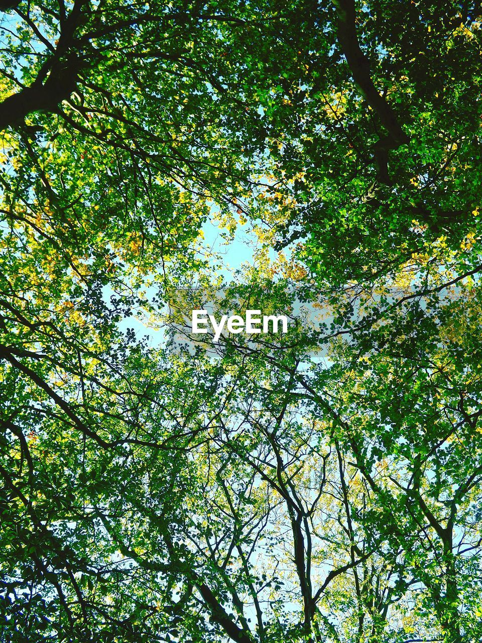 nature, tree, forest, low angle view, day, beauty in nature, branch, blue sky, growth, no people, outdoors, freshness