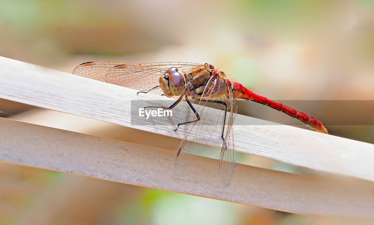 insect, invertebrate, animals in the wild, animal wildlife, animal, animal themes, one animal, close-up, focus on foreground, day, wood - material, animal wing, no people, railing, nature, outdoors, dragonfly, selective focus, zoology, sunlight