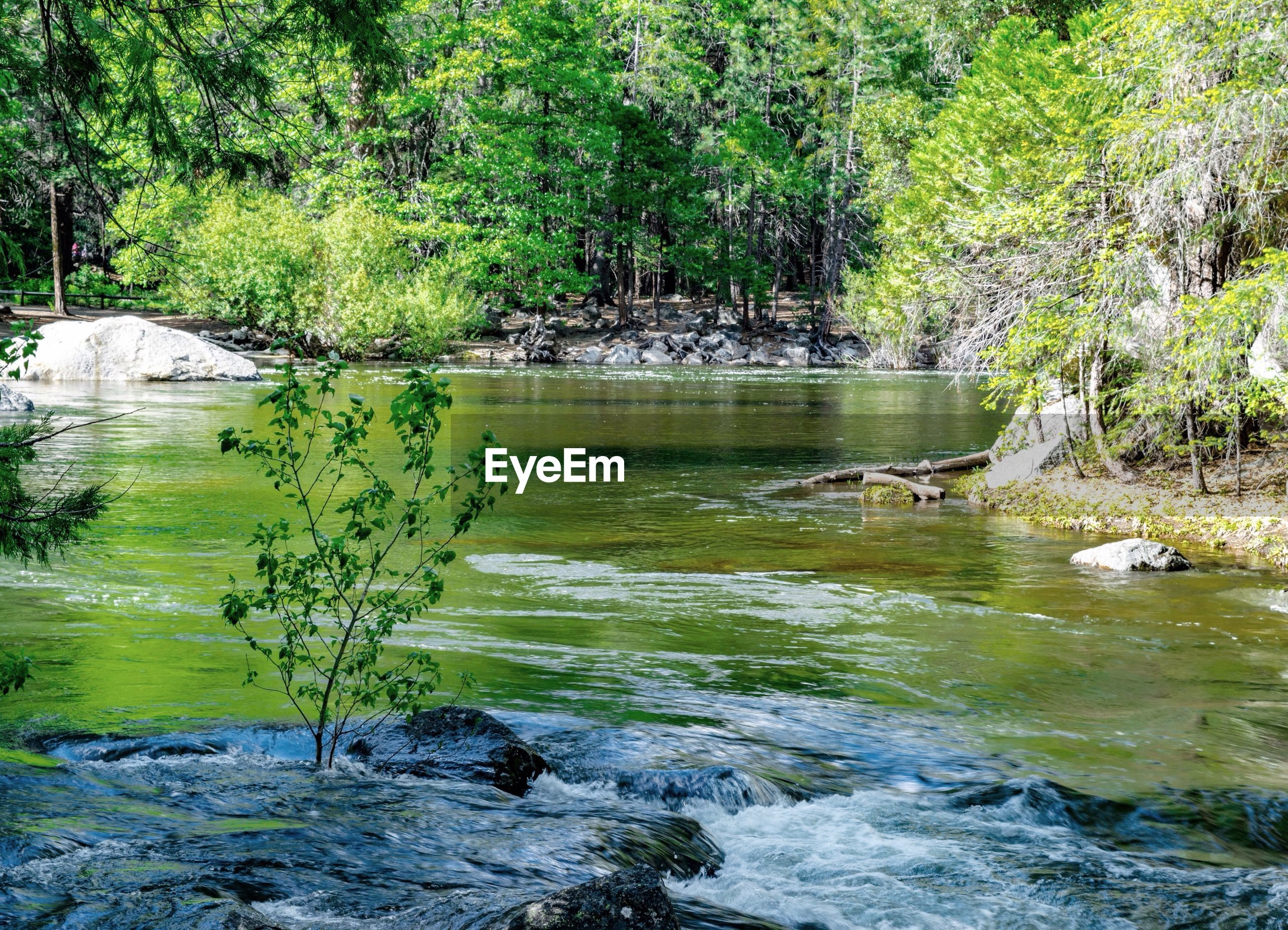 water, tree, animal themes, animals in the wild, wildlife, forest, river, nature, bird, beauty in nature, waterfront, stream, tranquility, flowing water, green color, one animal, scenics, motion, rock - object, tranquil scene