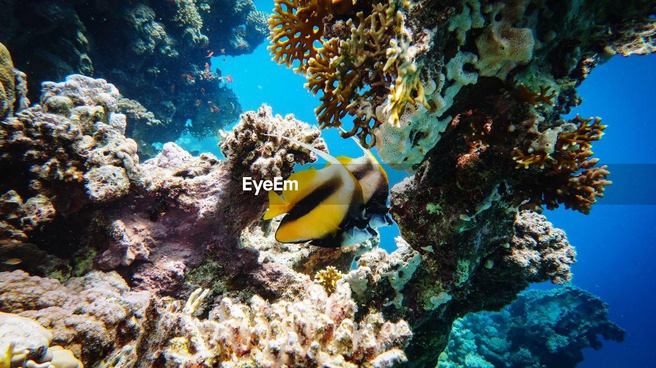 CLOSE-UP OF FISH SWIMMING UNDERWATER
