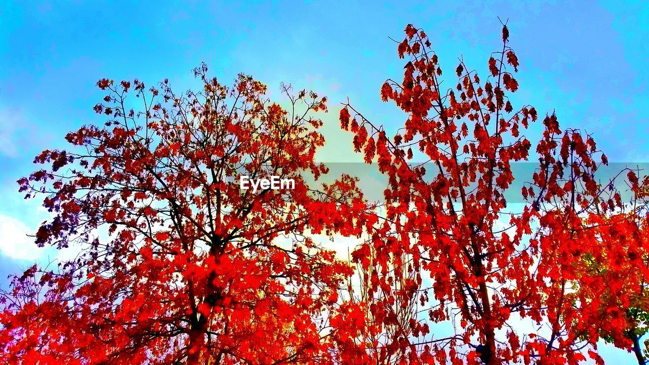 growth, tree, nature, low angle view, beauty in nature, day, autumn, outdoors, sky, branch, flower, no people, freshness