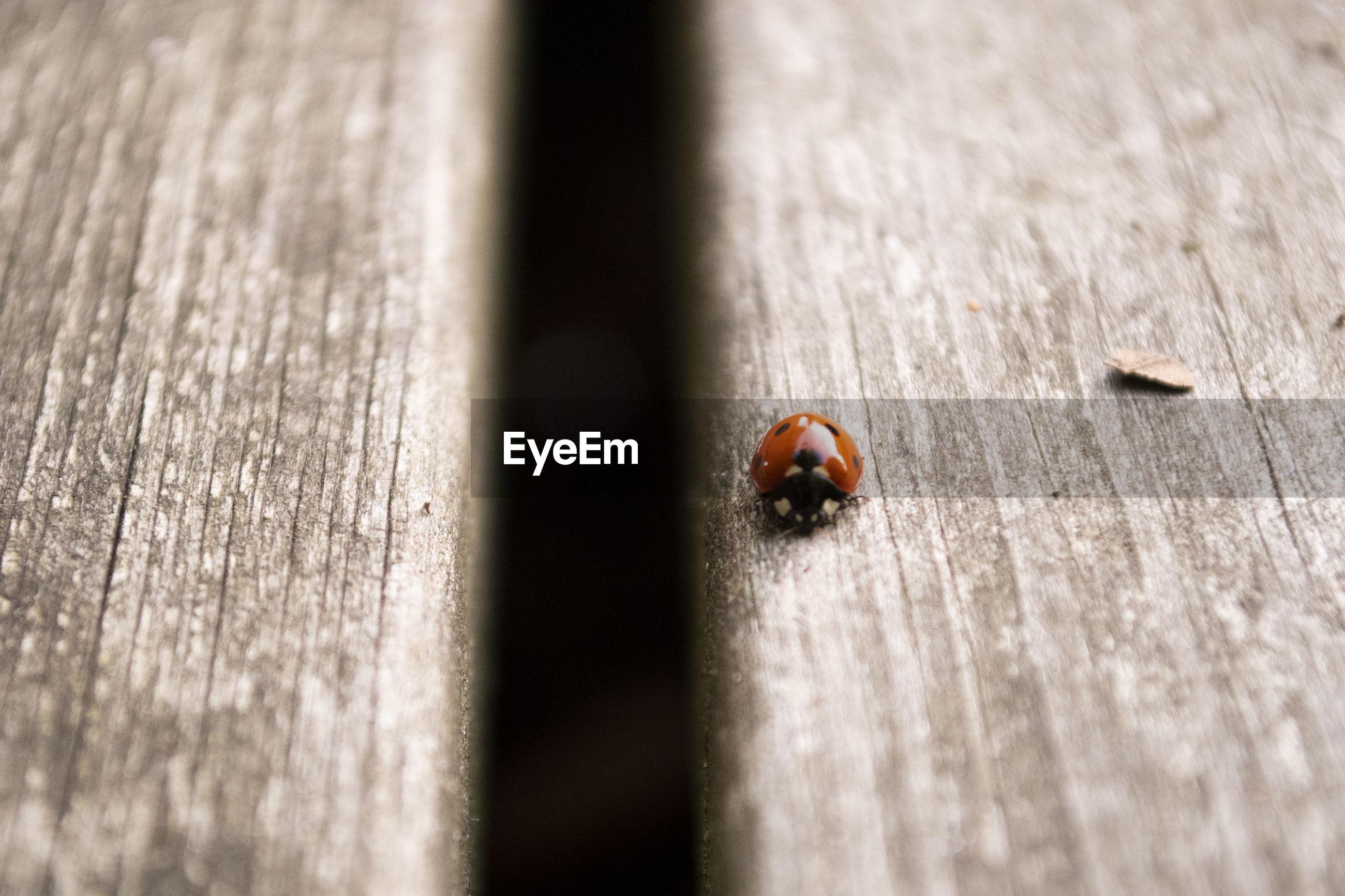 High angle view of ladybug on wood