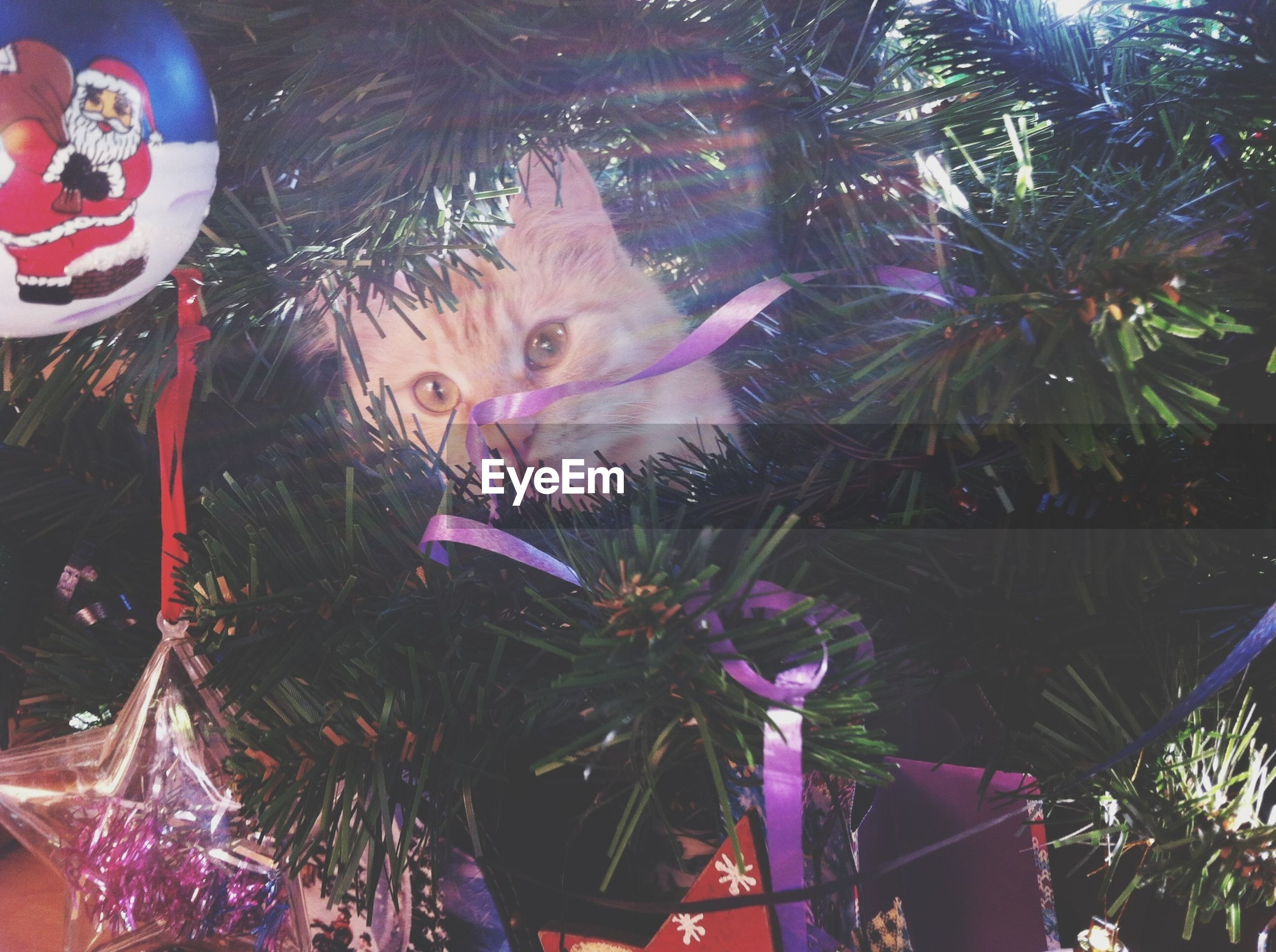 celebration, leisure activity, looking at camera, portrait, lifestyles, tree, person, arts culture and entertainment, front view, low angle view, headshot, animal representation, fun, art, christmas, young adult, waist up, art and craft