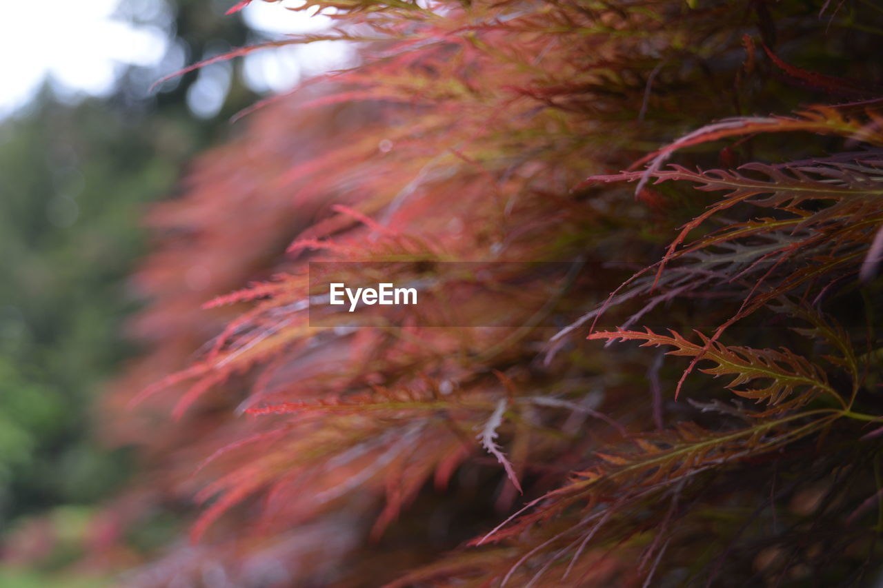 plant, selective focus, growth, close-up, beauty in nature, nature, no people, day, plant part, leaf, tree, focus on foreground, autumn, outdoors, change, vulnerability, tranquility, fragility, land, leaves