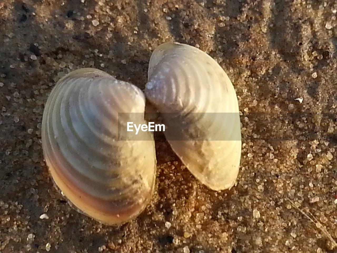 animal shell, animal themes, sea life, animals in the wild, one animal, snail, nature, sand, animal wildlife, seashell, no people, close-up, gastropod, sea, beach, beauty in nature, fragility, underwater, undersea, outdoors, day