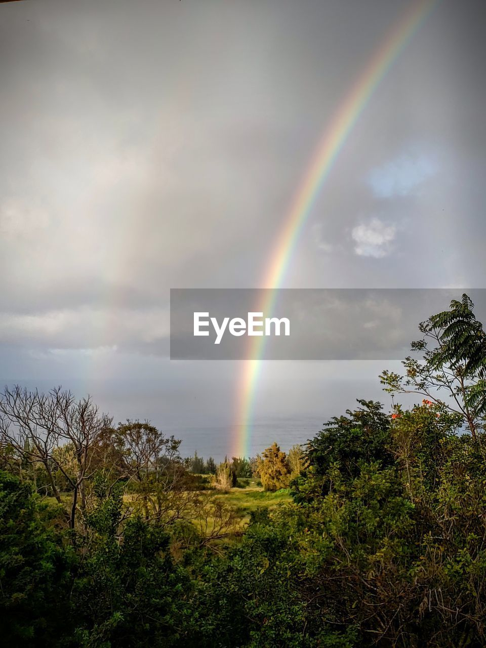sky, beauty in nature, scenics - nature, rainbow, cloud - sky, plant, tree, tranquil scene, idyllic, tranquility, double rainbow, non-urban scene, no people, nature, remote, day, multi colored, growth, land, outdoors