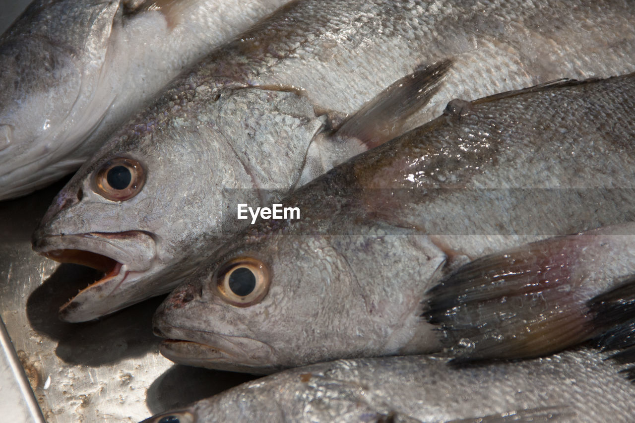 vertebrate, fish, animal, seafood, freshness, close-up, food and drink, food, raw food, for sale, no people, healthy eating, wellbeing, ice, market, cold temperature, retail, high angle view, day, outdoors, fish market, fishing industry