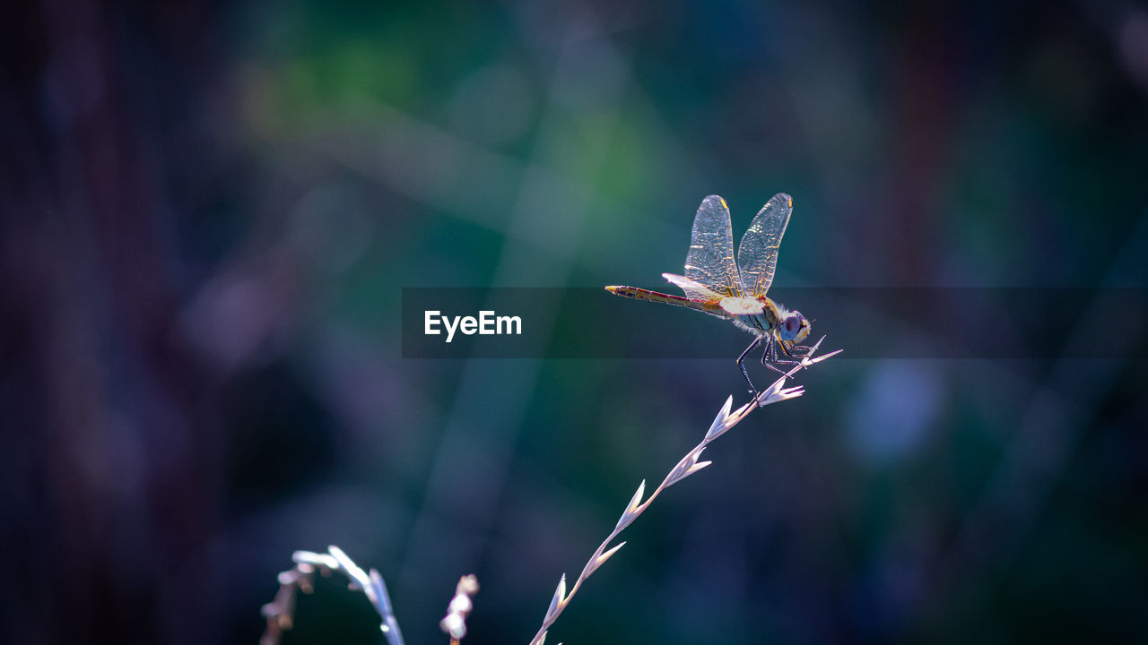 focus on foreground, close-up, plant, nature, day, beauty in nature, growth, outdoors, no people, selective focus, fragility, flower, flowering plant, animals in the wild, vulnerability, freshness, one animal, animal wildlife, animal, animal themes
