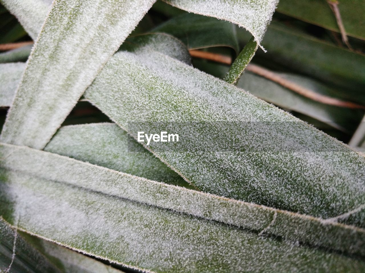 plant, close-up, leaf, plant part, growth, no people, green color, nature, day, focus on foreground, outdoors, beauty in nature, selective focus, tranquility, land, pattern, wood - material, vulnerability, succulent plant, winter