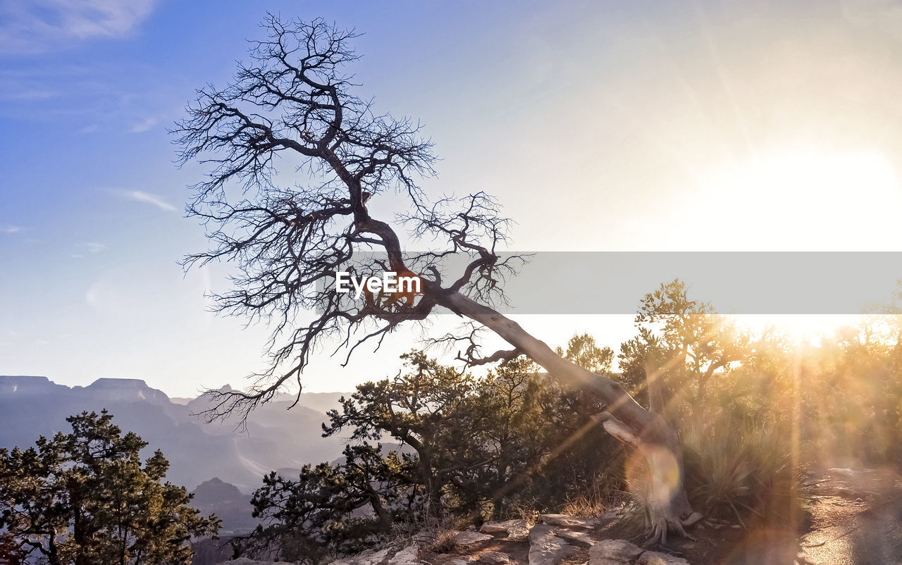 tree, sky, plant, sunlight, beauty in nature, nature, branch, sunbeam, scenics - nature, tranquility, sun, lens flare, mountain, day, sunset, no people, outdoors, tranquil scene, low angle view, non-urban scene, bright