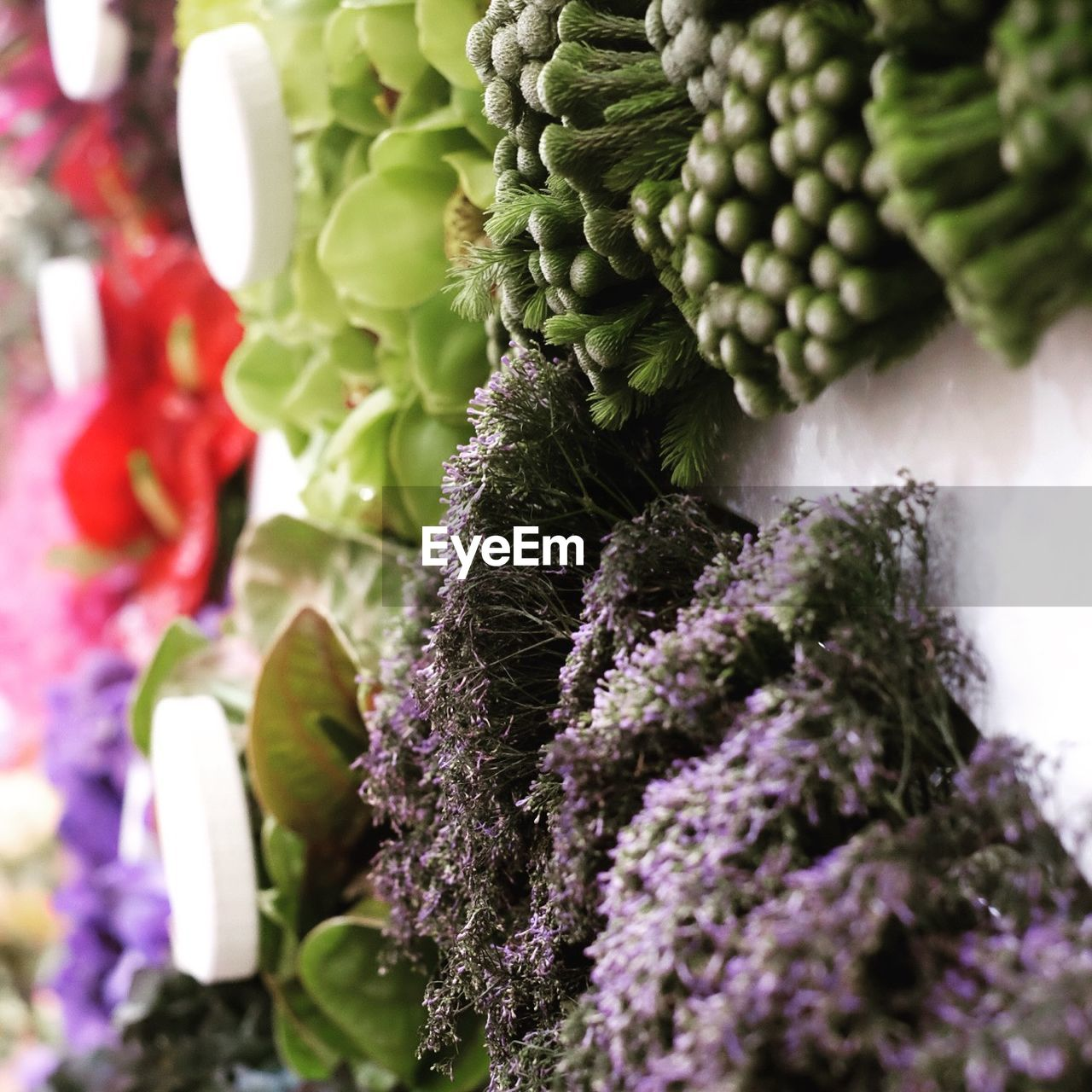 freshness, growth, no people, purple, food and drink, day, close-up, healthy eating, food, flower, fragility, beauty in nature, nature, indoors