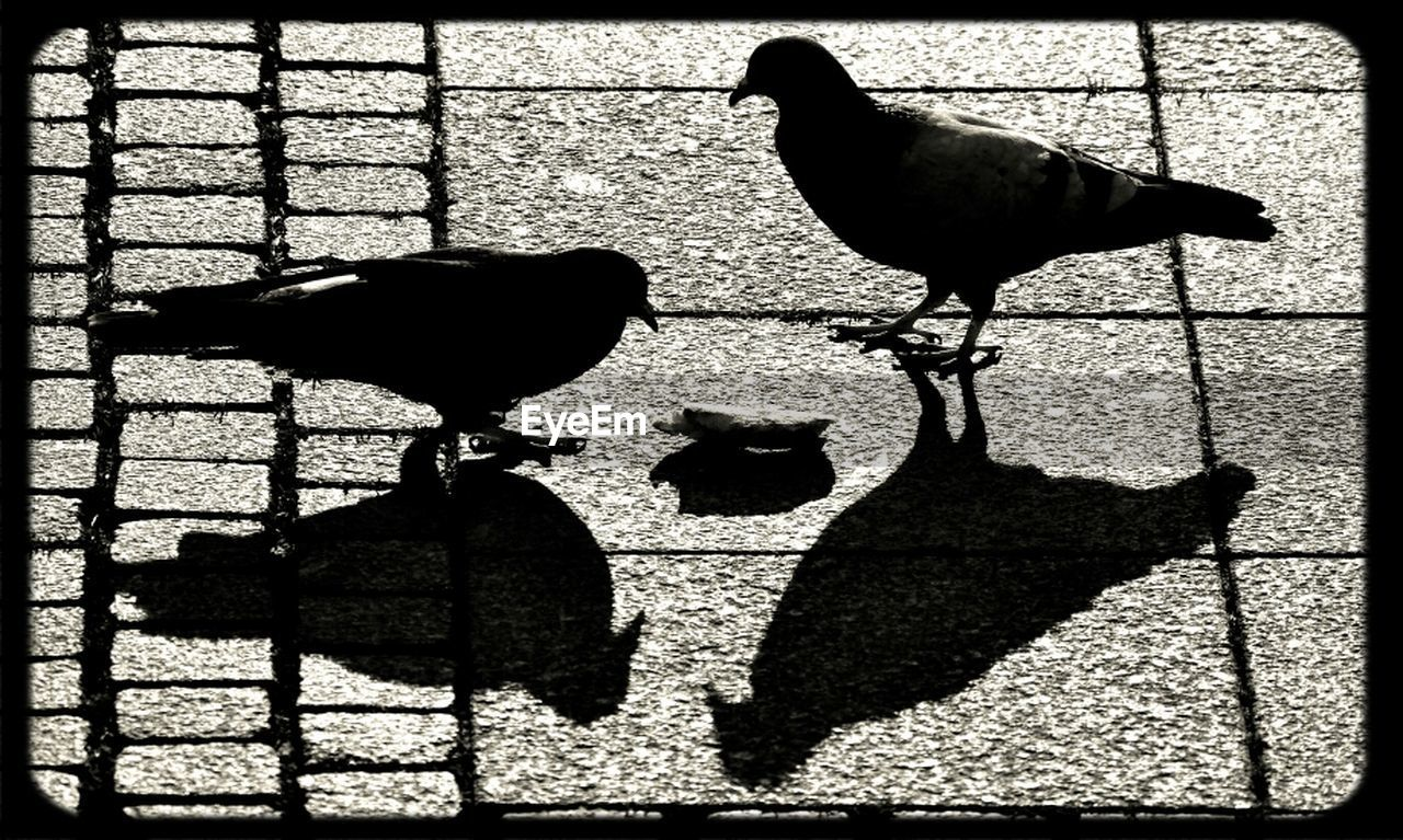 shadow, bird, animal themes, silhouette, sunlight, no people, outdoors, day