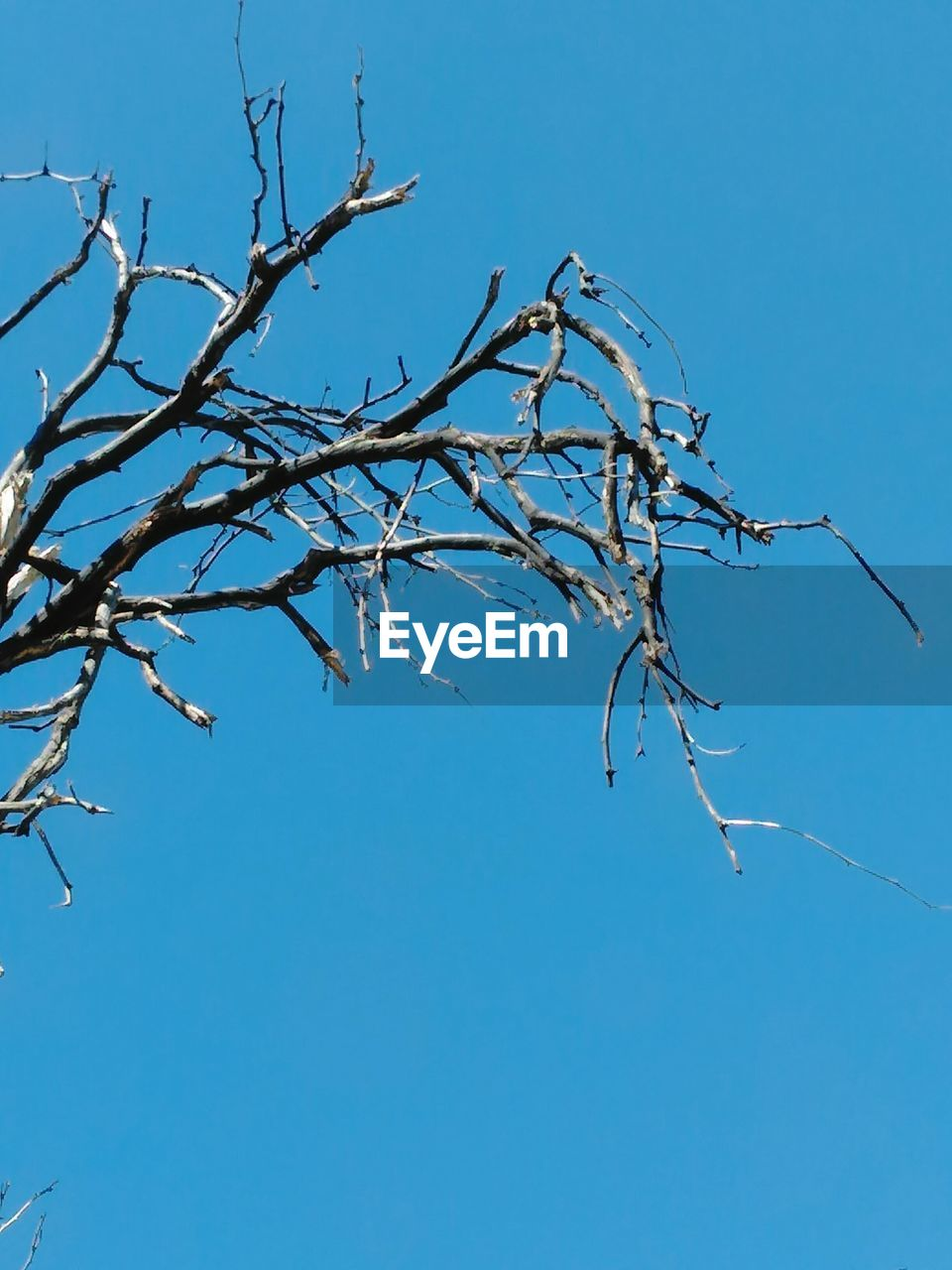 bare tree, blue, low angle view, branch, tree, nature, no people, clear sky, day, dead plant, outdoors, beauty in nature, sky, close-up