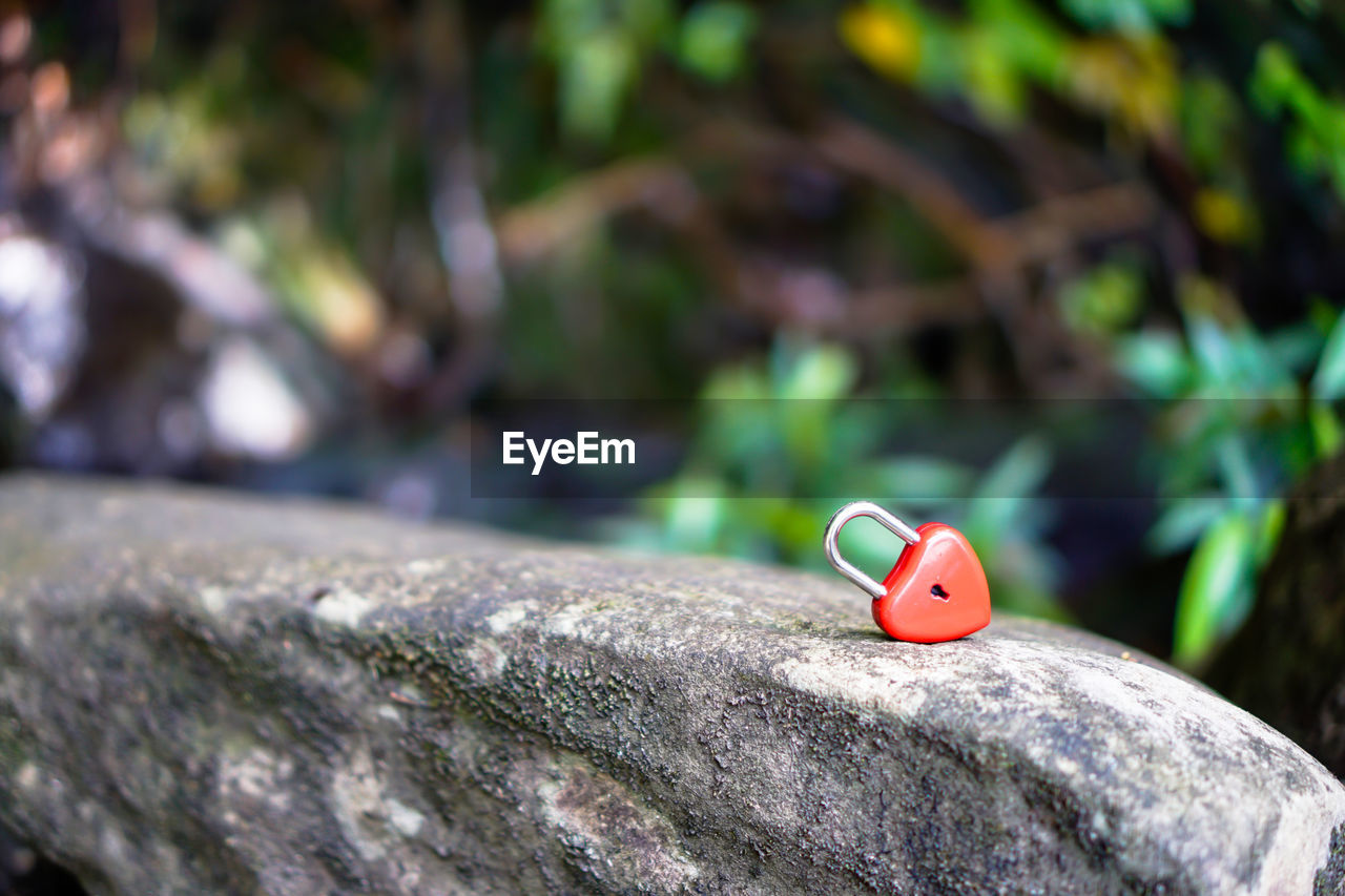 ladybug, focus on foreground, no people, selective focus, animal themes, close-up, animal, animals in the wild, insect, beetle, animal wildlife, representation, invertebrate, day, red, one animal, outdoors, animal representation, tree, toy