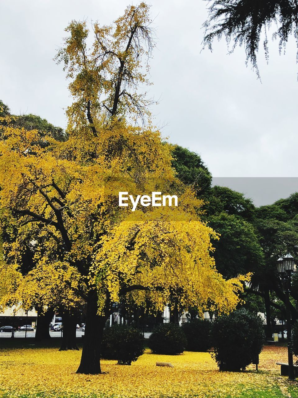 tree, plant, yellow, growth, sky, autumn, beauty in nature, nature, day, change, park, no people, tranquility, tranquil scene, outdoors, park - man made space, land, cloud - sky, branch, scenics - nature