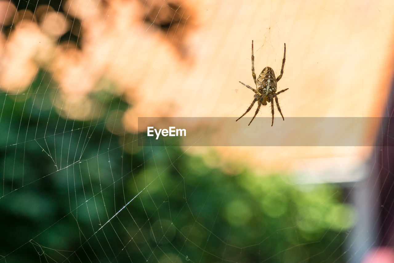 animal themes, invertebrate, animal, one animal, animal wildlife, animals in the wild, insect, spider web, fragility, close-up, arachnid, arthropod, spider, focus on foreground, selective focus, nature, vulnerability, no people, day, outdoors, animal leg, web