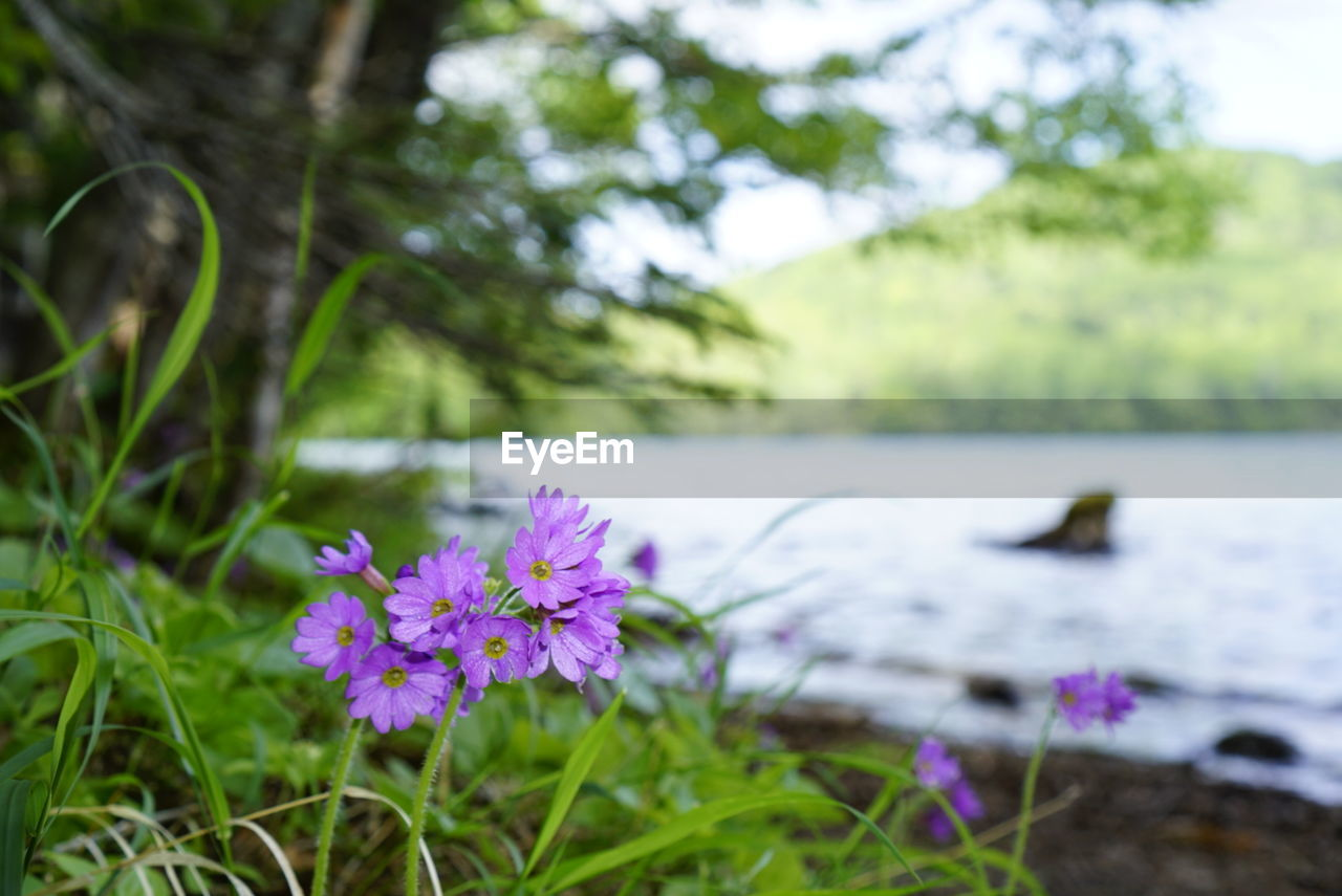 flower, nature, beauty in nature, focus on foreground, growth, fragility, day, no people, petal, selective focus, outdoors, grass, plant, green color, freshness, close-up, animal themes, blooming, flower head, water, bird, crocus