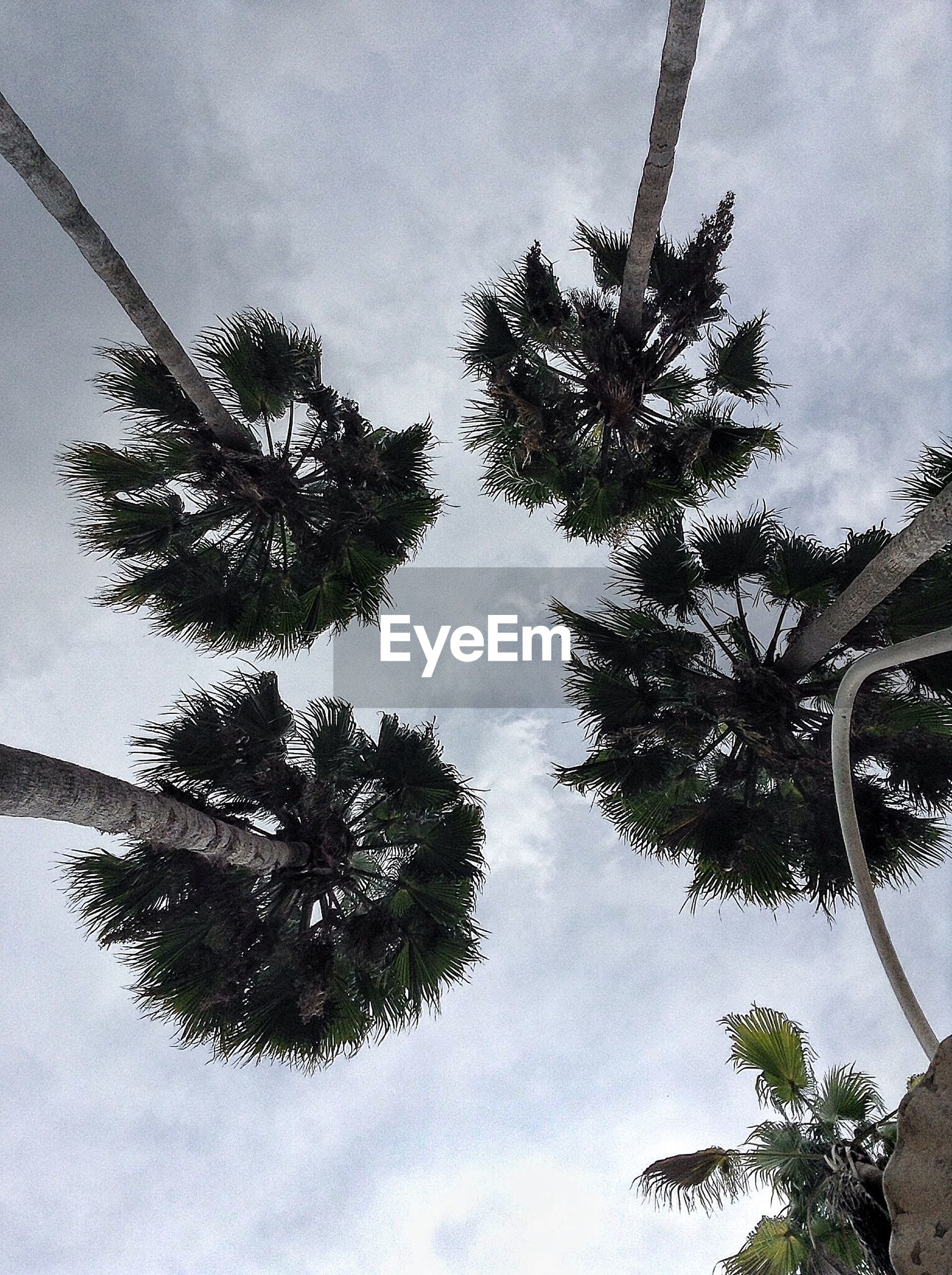 Directly below shot of palm trees against cloudy sky