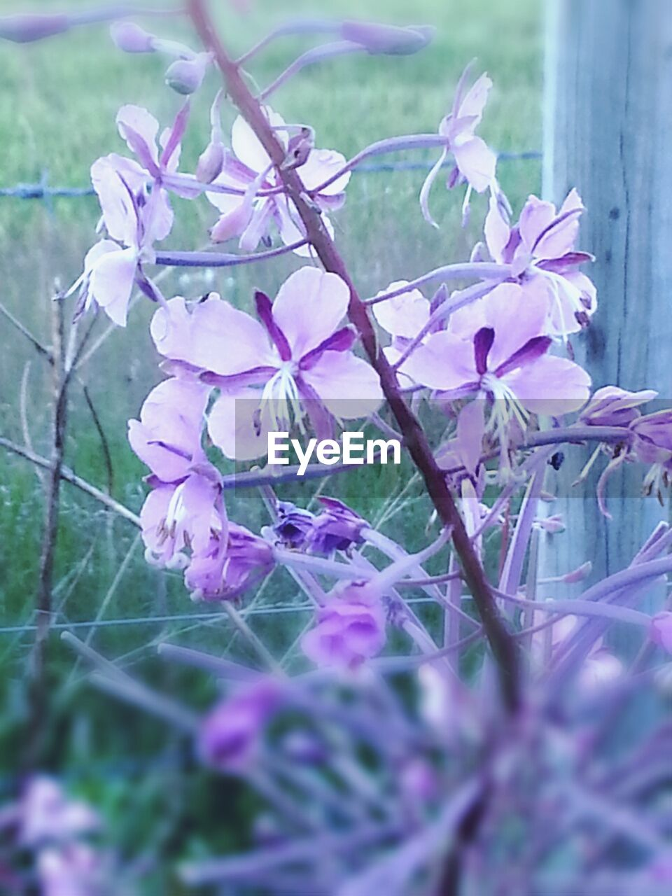 flower, beauty in nature, nature, growth, fragility, purple, no people, day, outdoors, petal, plant, close-up, freshness, branch, tree, flower head