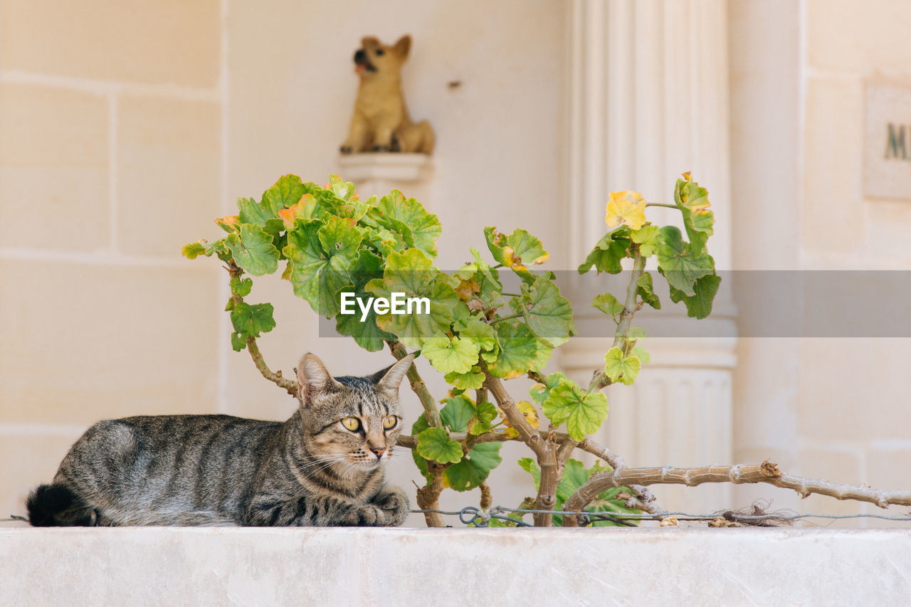 Cat Relaxing By Plant