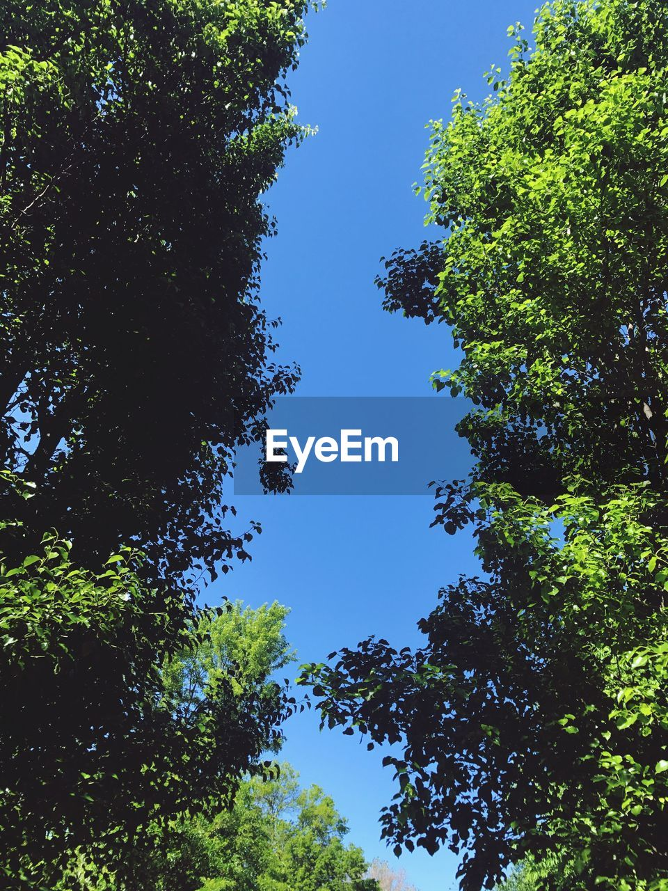 tree, low angle view, nature, growth, green, forest, day, beauty in nature, blue, clear sky, blue sky, no people, branch, sky, outdoors