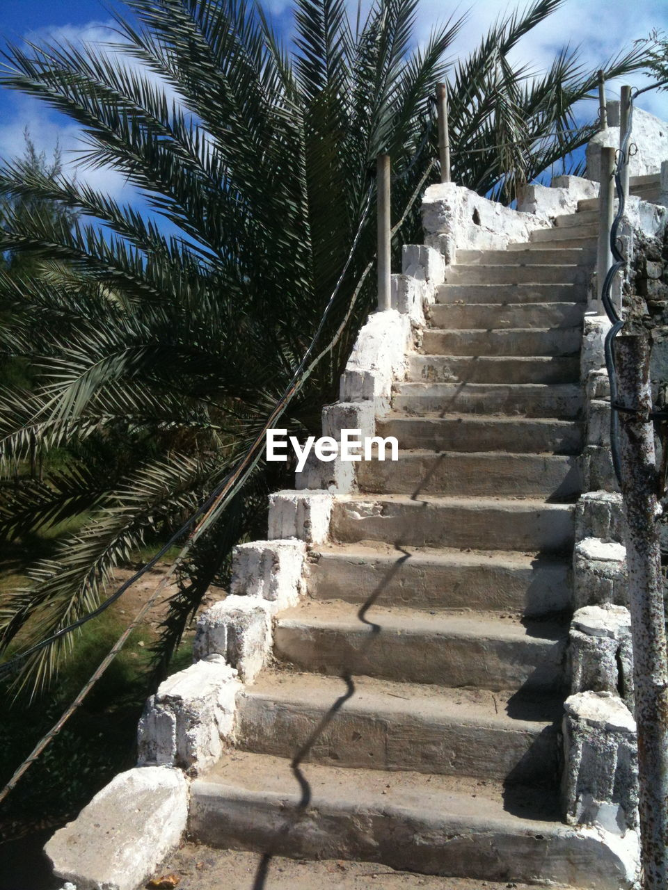 palm tree, steps, steps and staircases, staircase, tree, in a row, day, outdoors, the way forward, growth, nature, built structure, plant, no people, building exterior, beauty in nature, sky