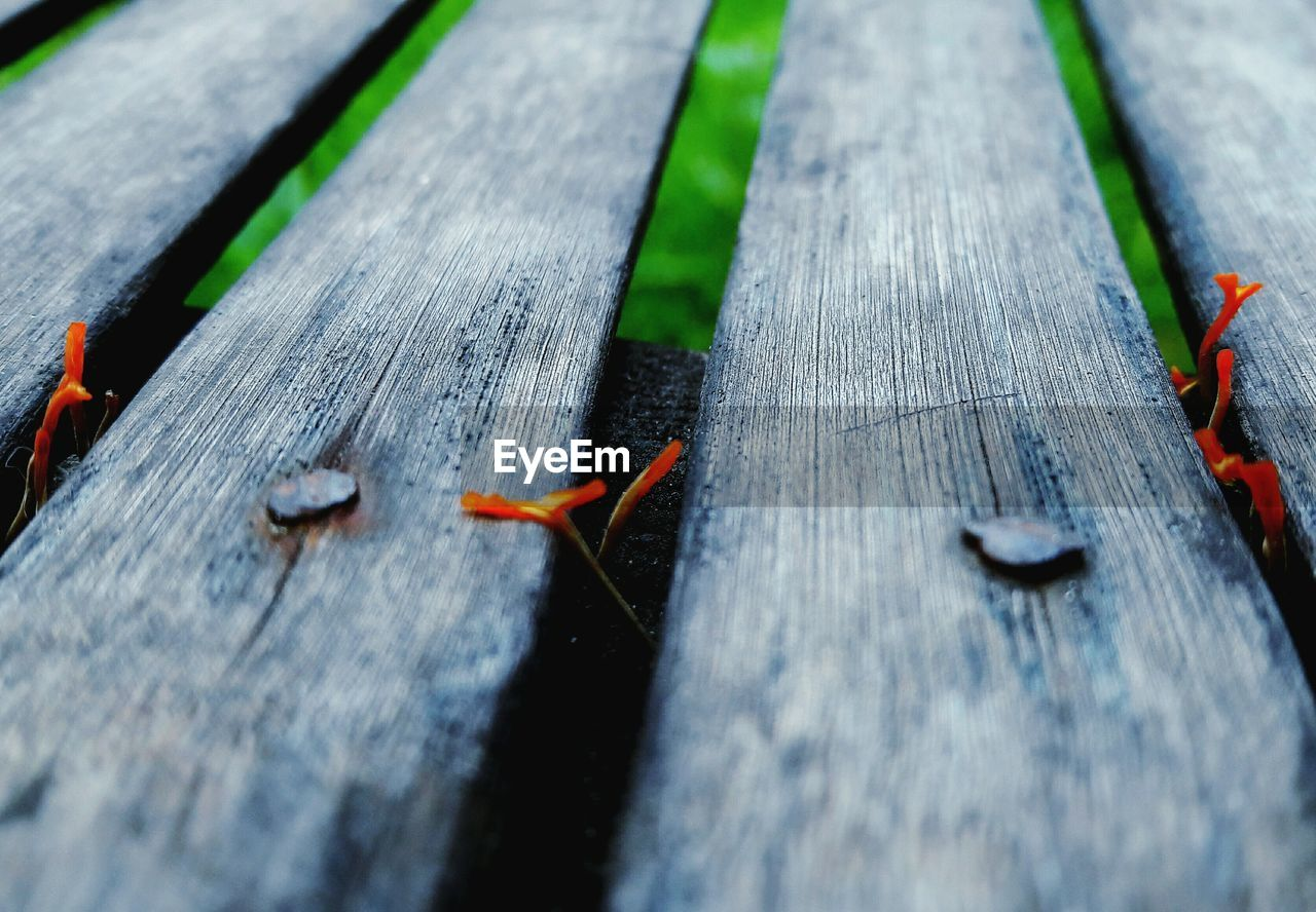 wood - material, selective focus, no people, close-up, day, animal, animal themes, animal wildlife, animals in the wild, high angle view, red, textured, invertebrate, outdoors, nature, table, insect, plank, one animal, wood