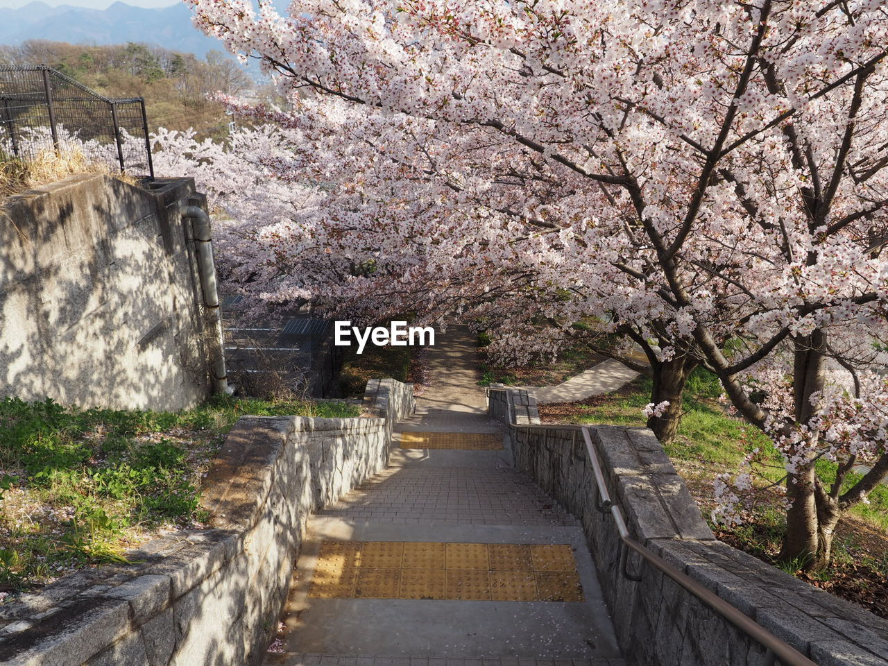 View Of Blooming Tree