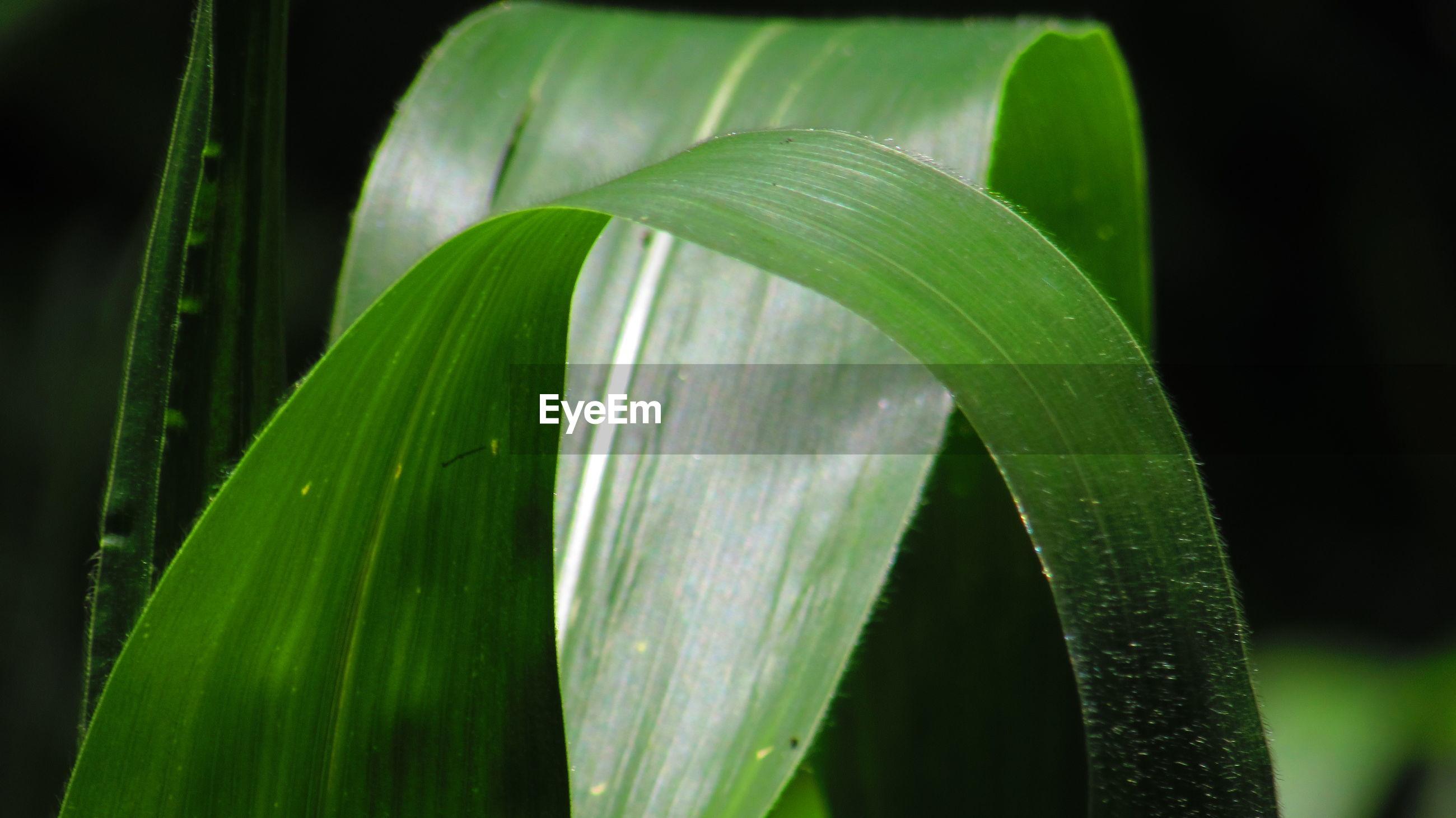 Close-up of grass blades